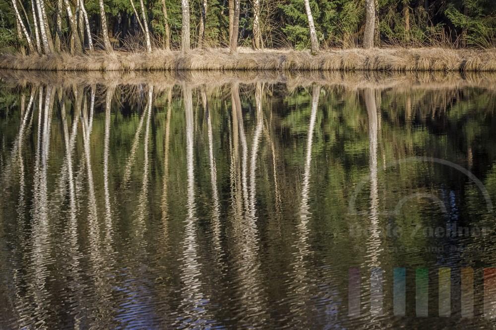 Birkenstämme spiegeln sich am Ufer eines Sees