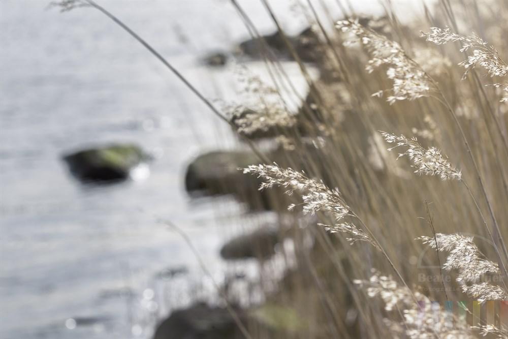 Sonnige Lichtstimmung am Ufer der Schlei an einem Frühlingsnachmittag