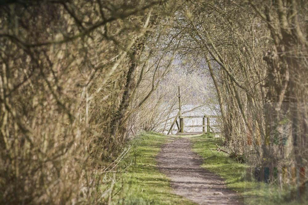 Von Gestrüpp, Bäumen und Buschwerk gesäumter Trampelpfad führt zu einem Steg am Ufer des  Ratzeburger Sees