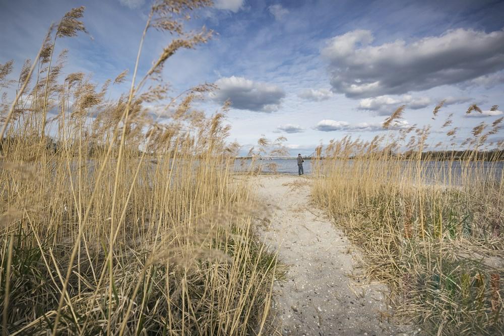 Mann steht am Ufer der Schlei und Angelt, Blick durch Schilfhalme, im Hintergrund die Klappbrücke von Lindaunis