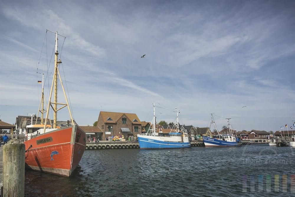 Fischkutter im Hafen von Maasholm/Schlei, sonnig