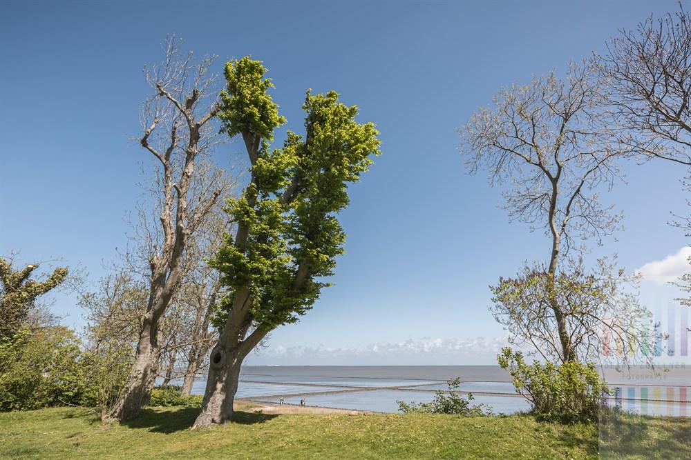 Sonniger Frühlingstag am Grünen Kliff in Keitum/Sylt: Von hier hat man einen traumhaften Blick über das Wattenmeer