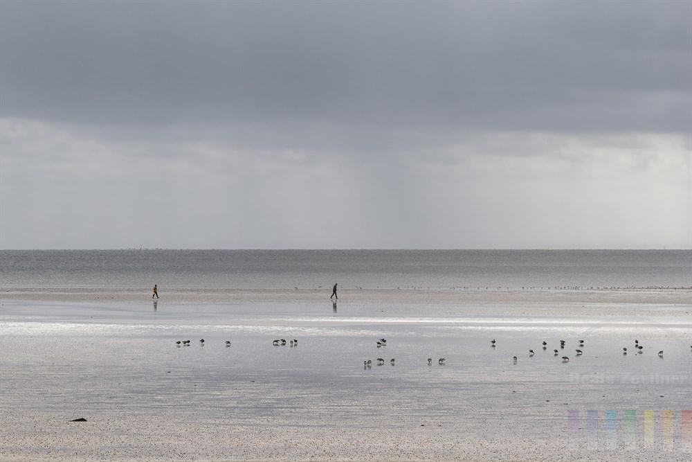 Zwei Menschen gehen über den bei Ebbe trocken gefallenen Meeresboden am Lister Königshafen auf Sylt. Im Vordergrund suchen Wildgänse im Schlick nach Nahrung. Der Himmel ist bewölkt, am Horizont fällt Regen, im Vordergrund scheint die Sonne auf das Watt