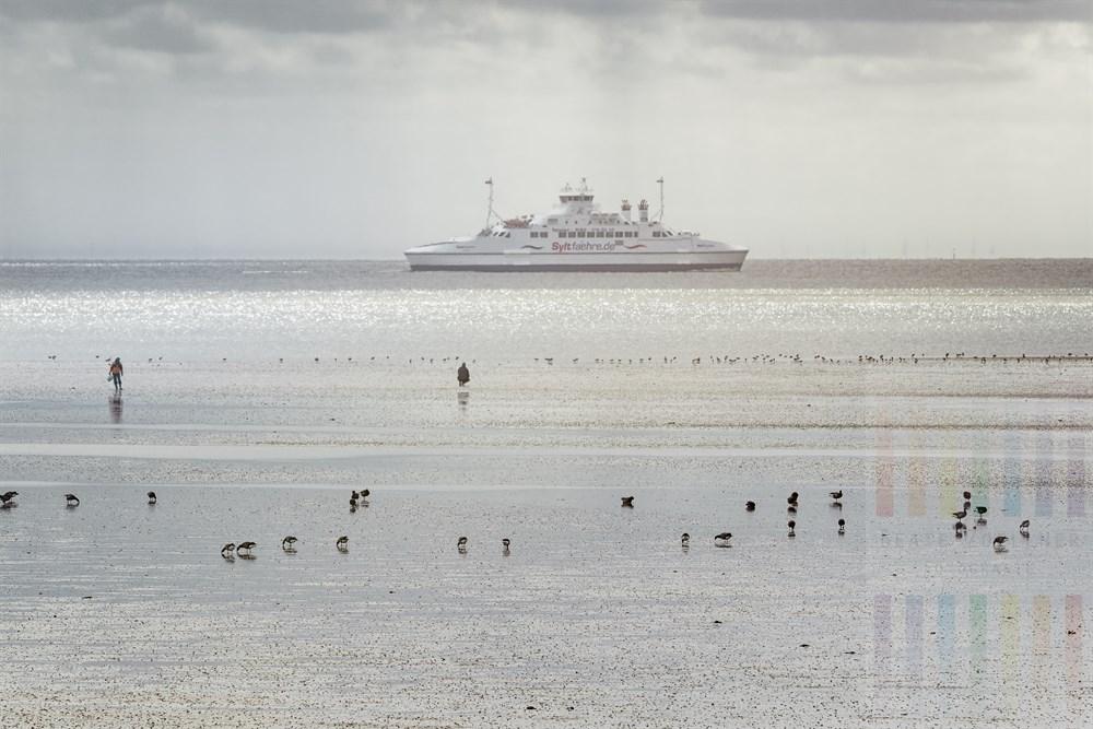 Das Wattenmeer vor List auf Sylt: Gänse suchen nach Nahrung, Menschen nach Wattwürmern, die Sonne lässt das Wasser glitzern, die Syltfähre ist unterwegs von List nach Havneby auf Römö in Dänemark