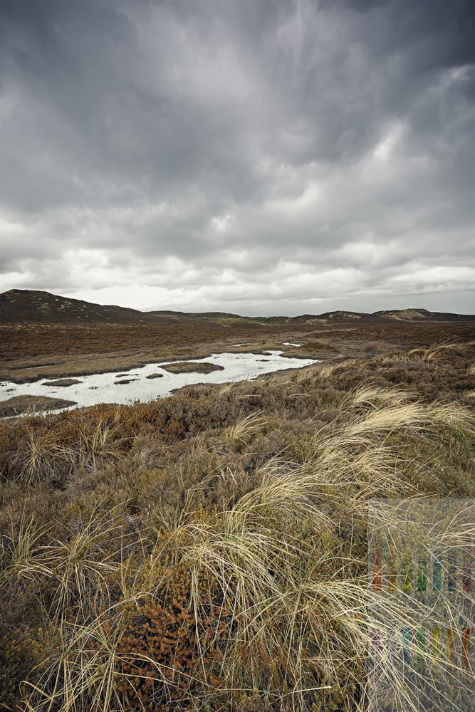 Menschenleere Dünen- und Heidelandschaft unter grauem Wolkenhimmel im Norden der Insel Sylt