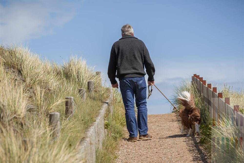 Mann führt seinen Hund (Border Collie) - wie vorgeschrieben  - durch die Sylter Dünenlandschaft