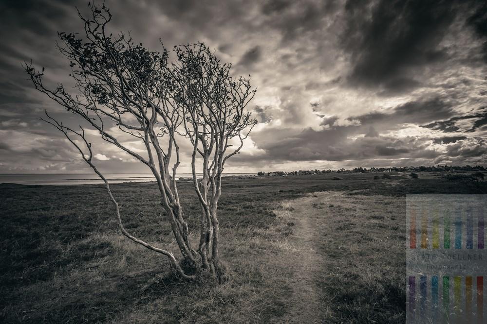 Herbsttag im Naturschutzgebiet Braderuper Heide auf der Insel Sylt. Im Vordergrund ein vom stetigen Westwind geformter Weißdorn-Busch. Der Pfad führt in den Wenningstedter Ortsteil Braderup