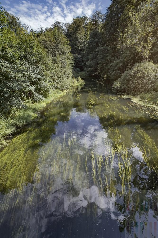Wasserpflanzen bewegen sich in Fließrichtung der Trave bei Nütschau, Blick von einer Brücke
