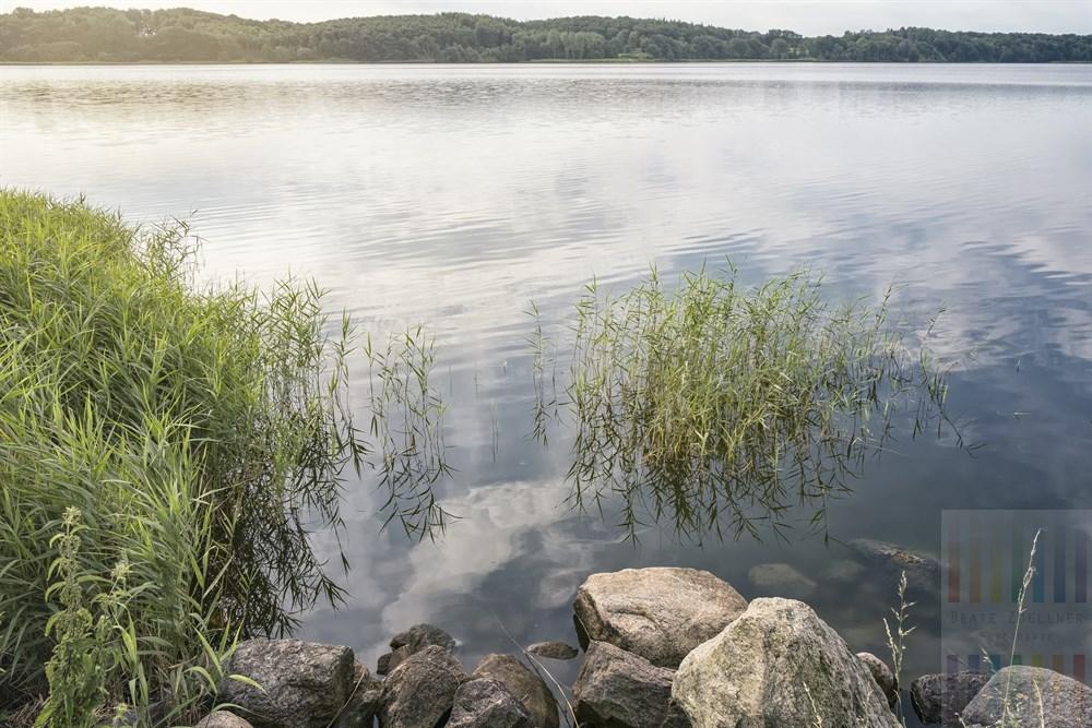 Sommerliche Morgenstimmung am Ufer der Schlei in der Nähe von Lindaunis