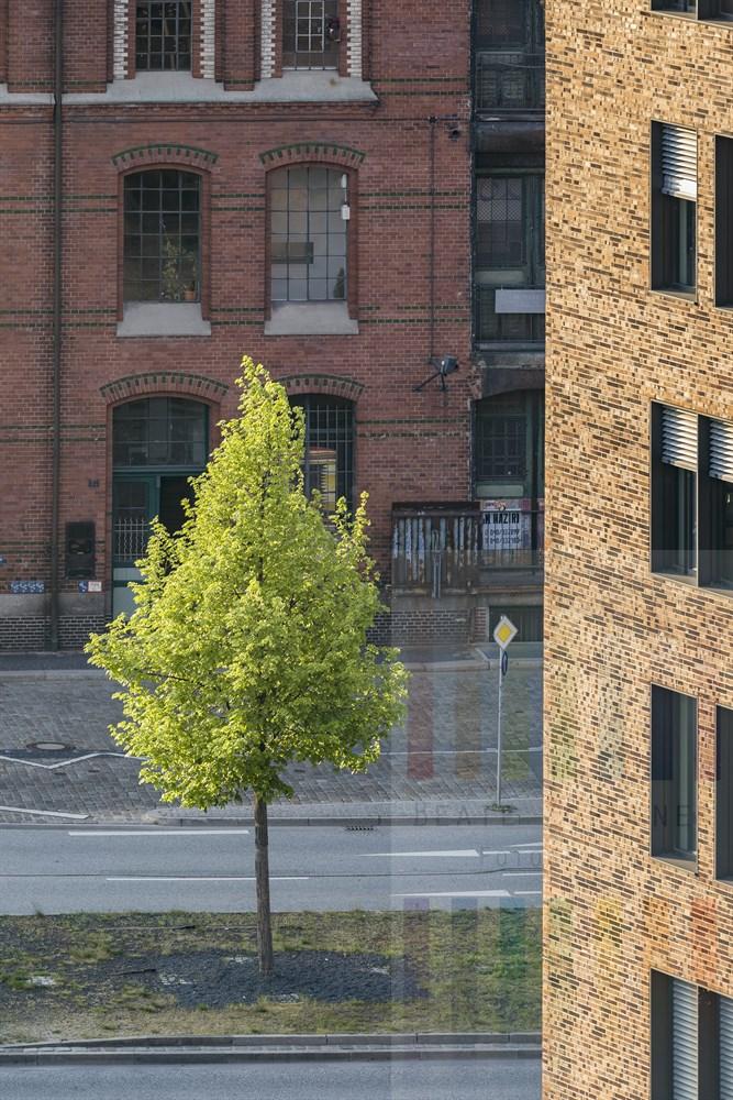 Ein bisschen verloren wirkt der frühlingsgrüne Baum im Licht der Abendsonne in der Hamburger Speicherstadt auf einer Straßeninsel... Blick aus dem Internationalen Maritimen Museum