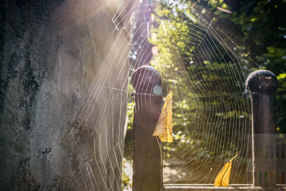 Im Spinnennetz bleiben Insekten, Herbstlaub und Sonnenstrahlen hängen. Die Spinne hat es an einer alten, schmiedeeisernen Pforte zu einer Villa in Hamburg gesponnen