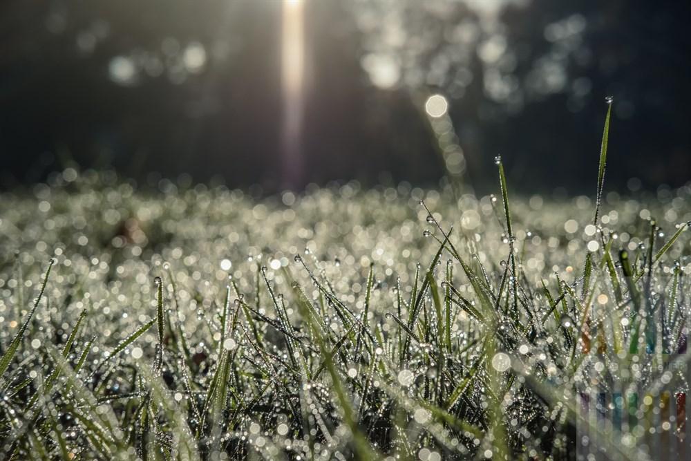Morgensonne scheint auf mit unzähligen Tautropfen bedeckte Rasenfläche vor dem Goßler-Haus in Hamburg-Blankenese