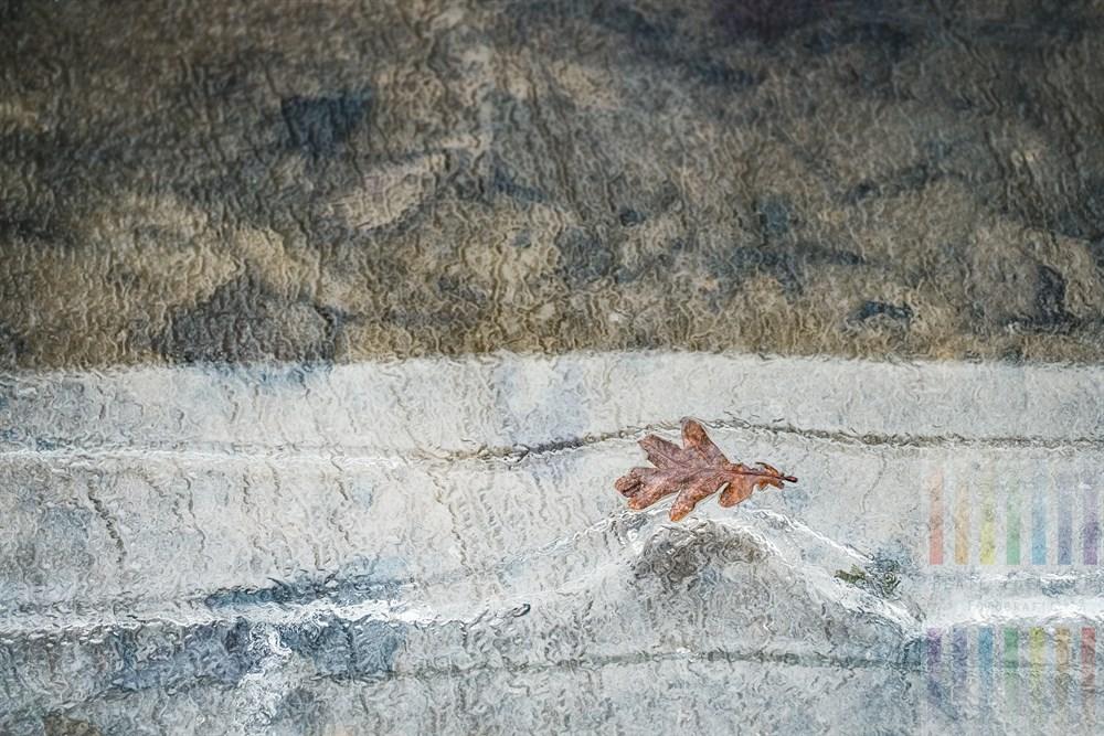 Eichenblatt ist im Wasser eines Grabens festgefroren
