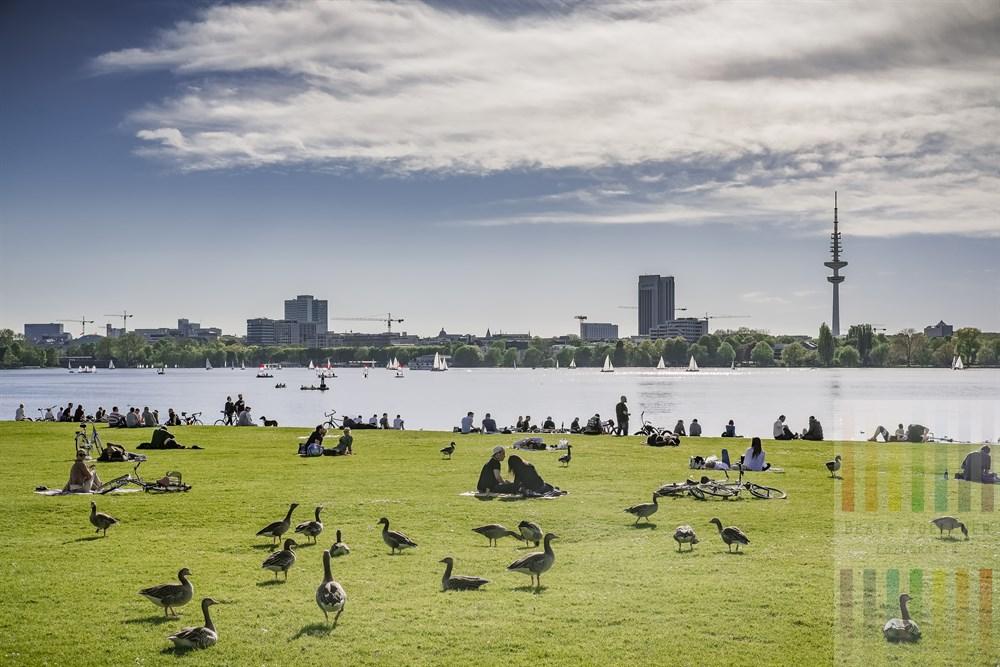 Sonnenhungrige Menschen und Wildgänse genießen den Frühlingstag auf der Wiese am östlichen Ufer der Hamburger Außenalster mit Blick auf die Skyline der Hansestadt