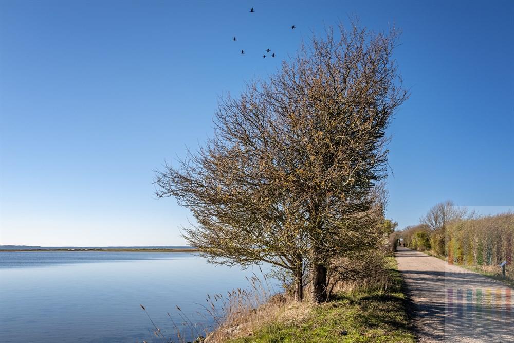 Sonniger Frühlingstag im Naturschutzgebiet Geltinger Birk an der Ostsee, Kormorane flieen am wolkenlosen Himmel