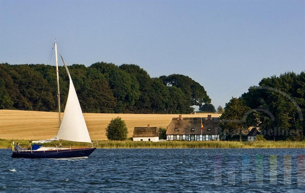 Segelboot auf der Schlei, im Hintergrund steht ein für die Gegend typisches Reetdachhaus, sommerliche Stimmung