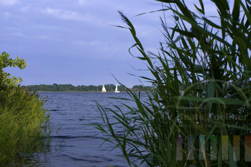 weiße Segel zweier Yachten leuchten in der Abendsonne auf der Schlei