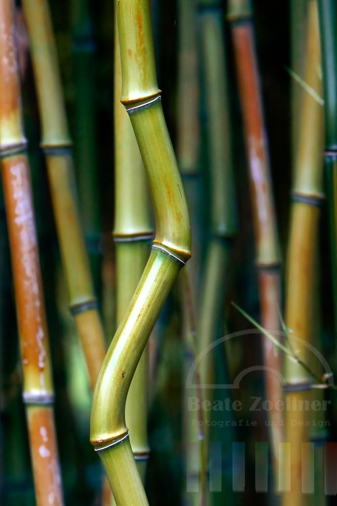 Bambus-Rohr mit Knick