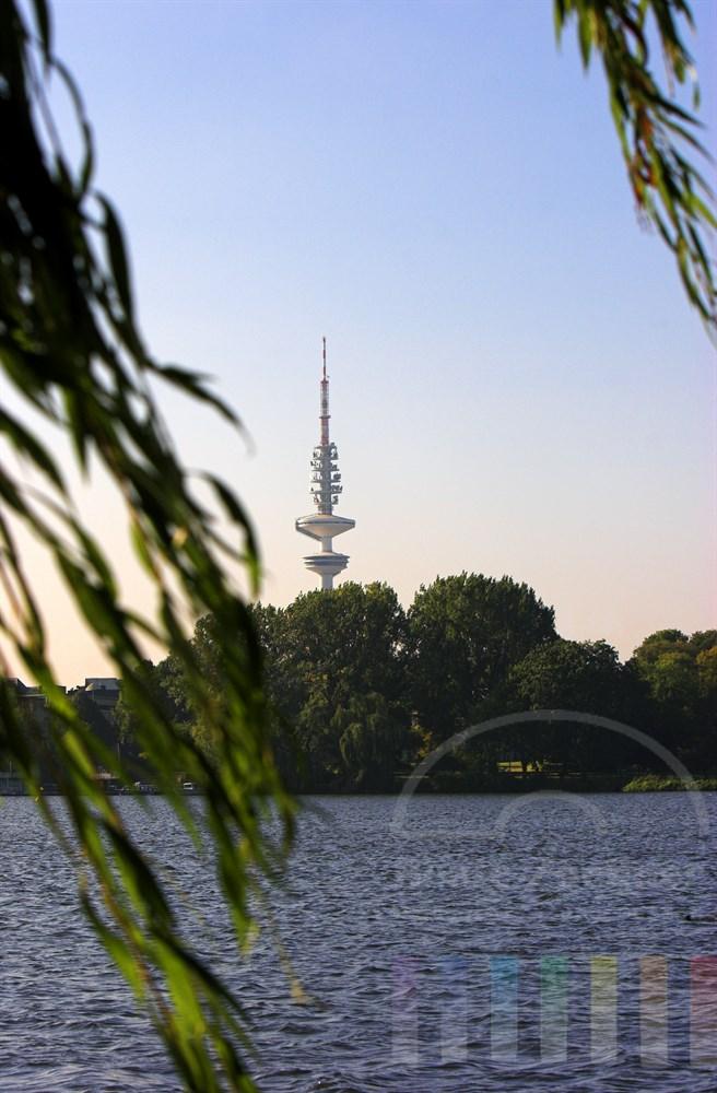Blick über die Hamburger Außenalster auf den Fernsehturm, im Vordergrund hängen Äste einer Trauerweide im Wind, Sommerwetter