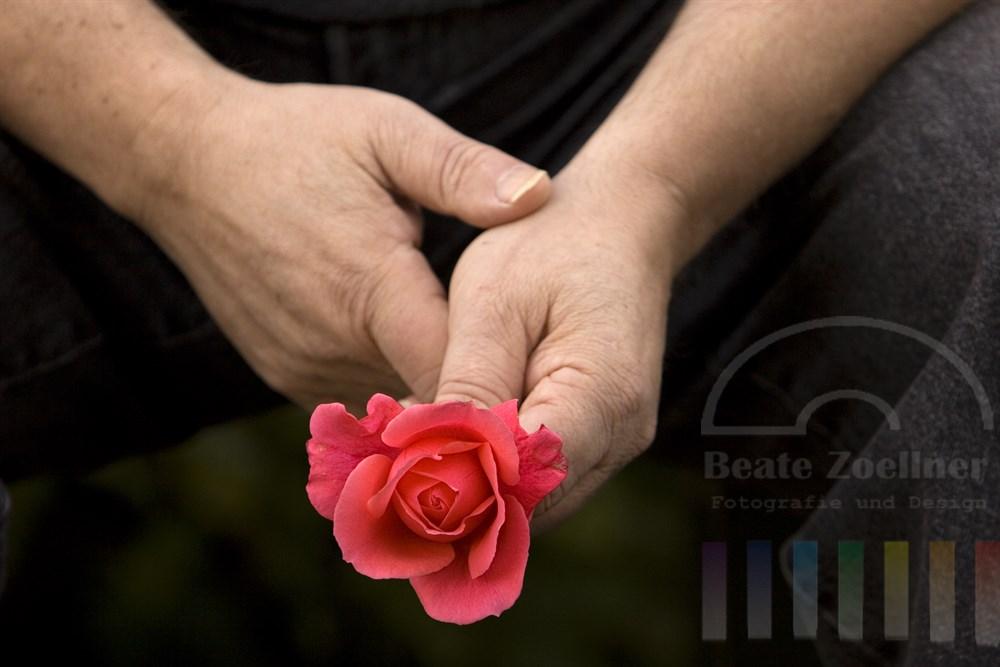 Hände eines wartenden Mannes halten rote Rosenblüte