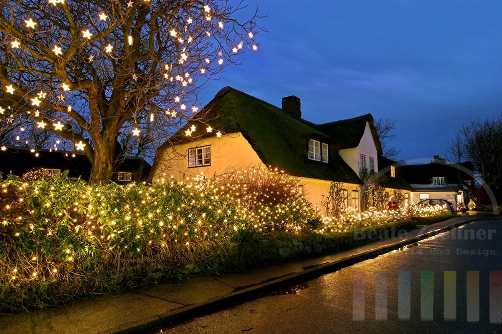 Blaue Stunde: Weihnachtlich geschmücktes Friesenhaus in Keitum auf Sylt. Unzählige kleine Lichter, teilweise in Sternenform, beleuchten einen alten Kastanienbaum im Garten des Hauses und die Sträucher und Büsche vor dem Haus. Die Strasse vor dem Haus glänzt durch einen Regenschauer.