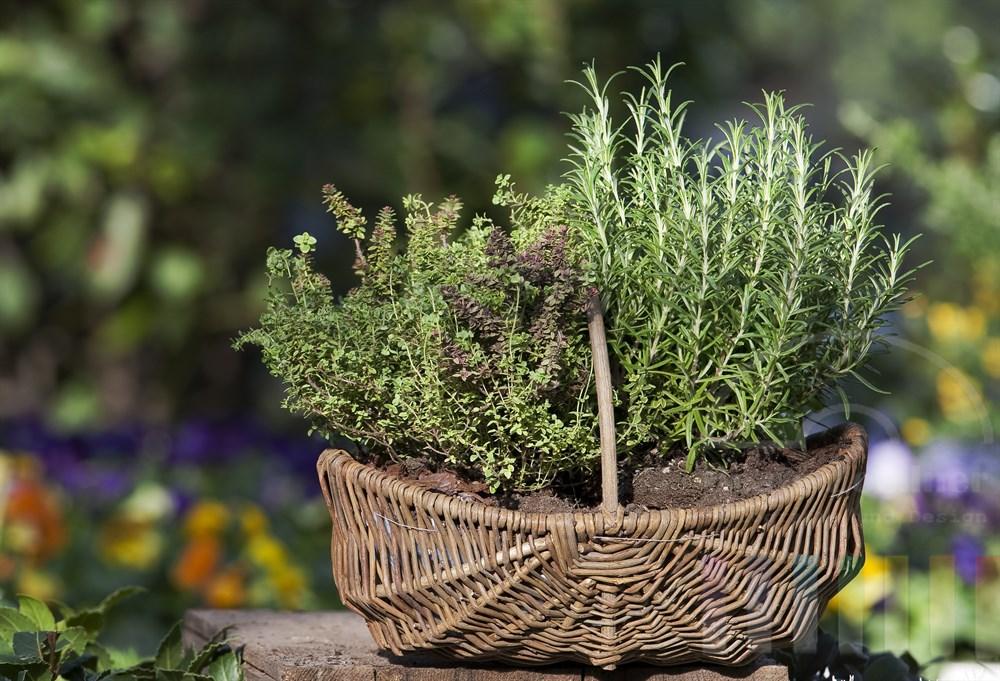 Mit Kraeutern bepflanzter Korb