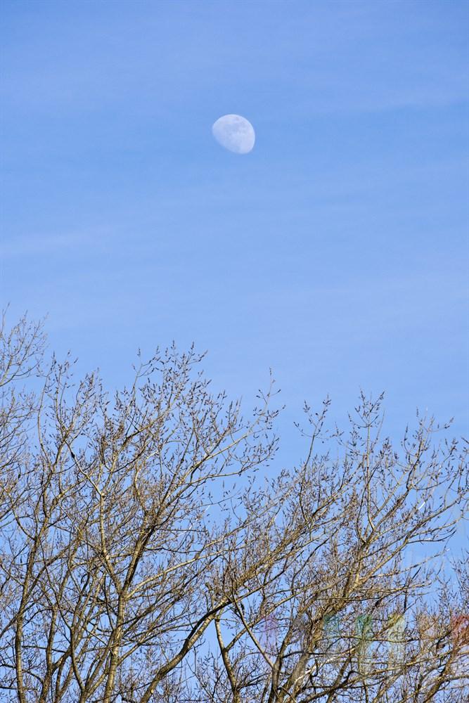 """Mond steht nachmittags am blauen Frühlingshimmel über knospenden Zweigen eines Baumes - Symbol für """"Der Lauf der Dinge"""""""