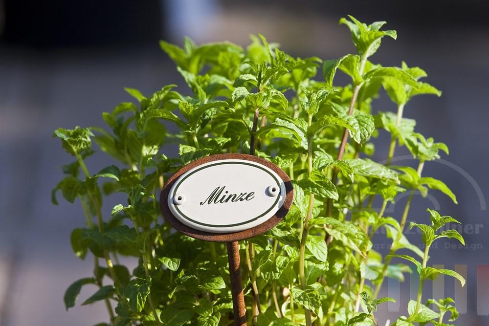 Minze-Pflanze mit nostalgischem Emaille-Namensschild