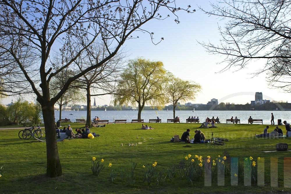 Menschen geniessen die Frühlingssonne auf den Wiesen am oestlichen Alsterufer - Narzissen bluehen im Vordergrund