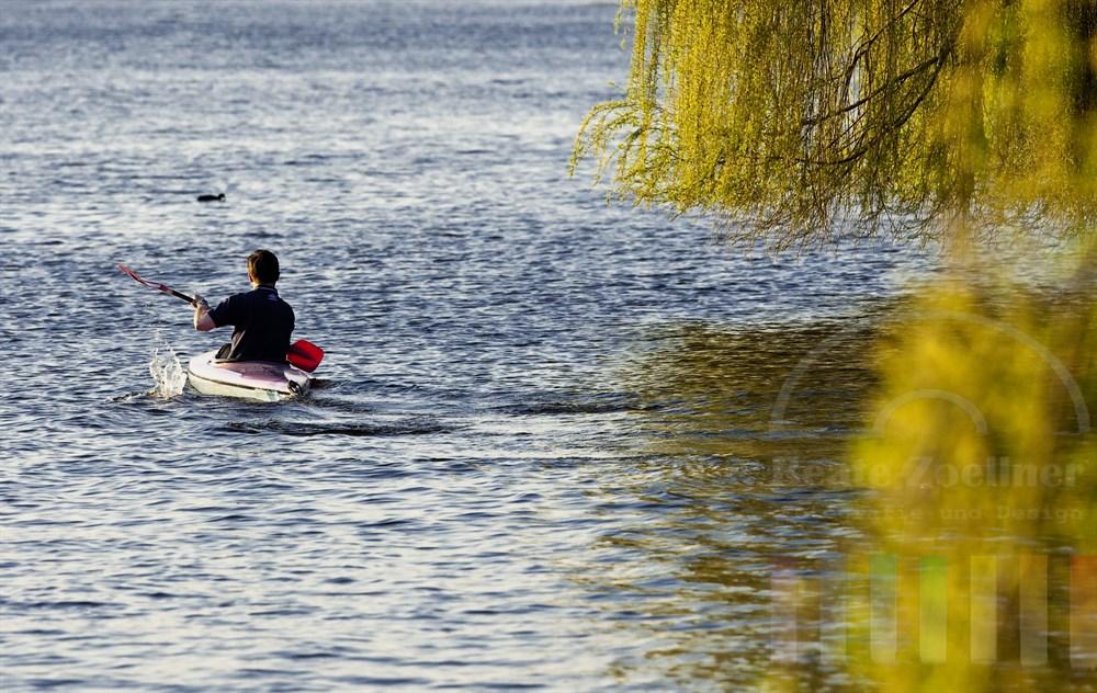 Mann paddelt in einem Kanu auf der Hamburger Aussenalster. Frisch-grüne Weidezweige hängen über dem Wasser