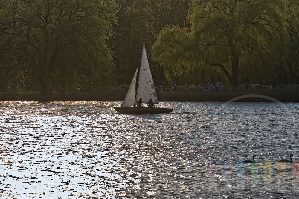 Frühlingsstimmung an der Hamburger Aussenalster am frühen Abend: Eine Jolle segelt im Gegenlicht, zwei Schwäne schwimmen auf dem Wasser, Spaziergänger sind auf dem Wanderweg unter alten Bäumen unterwegs