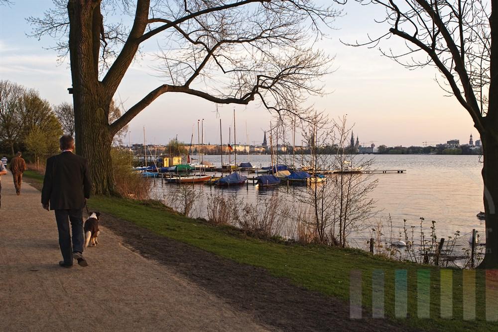 Abendstimmung: Segelboote liegen vertäut am Bootsteg an der Aussenalster - im Hintergrund die Türme der Hansestadt Hamburg. Am Ufer geht ein Mann mit Hund spazieren