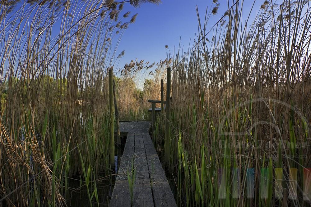 im Schilf versteckt liegender Holzsteg führt zum See, Abendstimmung