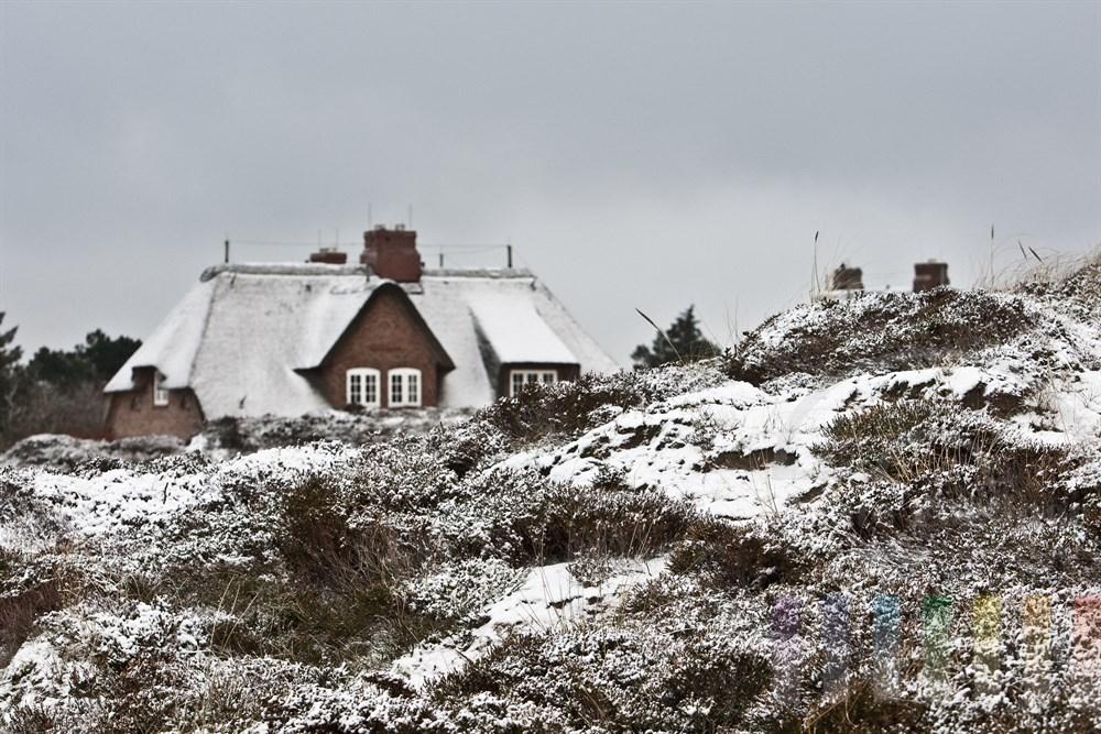 Sylter Wohnhaus in Kampen mit Schnee auf dem Reetdach - im Vordergrund verschneite Heidelandschaft
