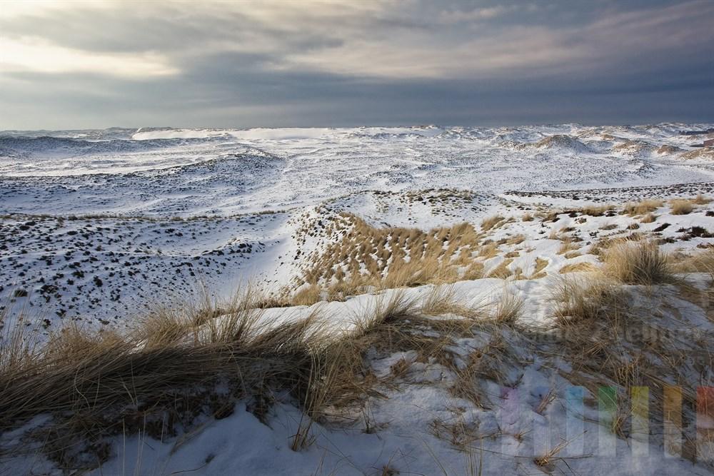 Blick überdie verschneiten Sylter Wanderdünen bei List,