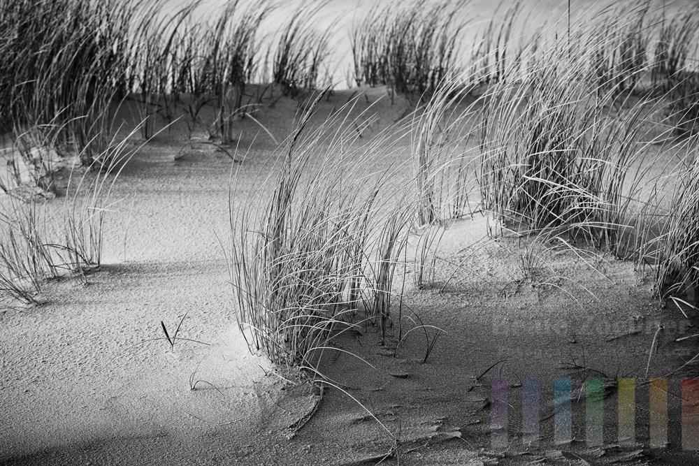 Morgensonne scheint auf Duenensand und sich im Wind wiegende Graeser