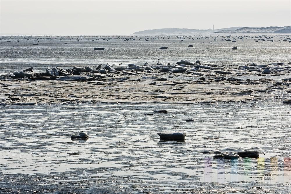 Das vereiste Wattenmeer vor Rantum/Sylt glitzert im Sonnenlicht. Eisschollen stapeln sich an hölzernen Buhnen. Wasservögel suchen nach Nahrung, Am Horizont ist die Nachbarinsel Amrum mit dem markanten Leuchtturm zu sehen. Entfernung: ca. 20 Kilometer