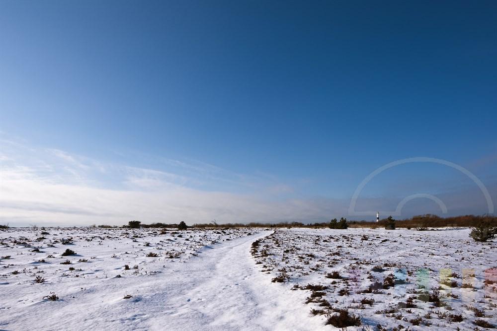 verschneite Landschaft in der Braderuper Heide - im Hintergrund der Leuchtturm von Kampen/Sylt, sonnig