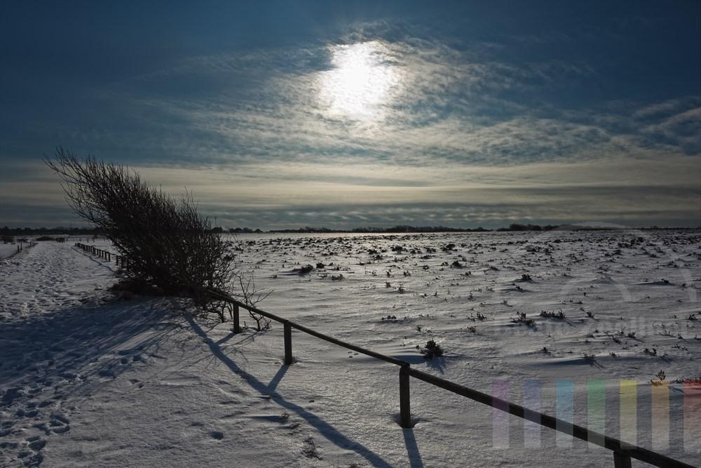 verschneite Landschaft in der Braderuper Heide, starkes Gegenlicht durch die Sonne. Ein Busch am Wegesrand hat seine Wuchsrichtung dem stetigen Westwind angepasst