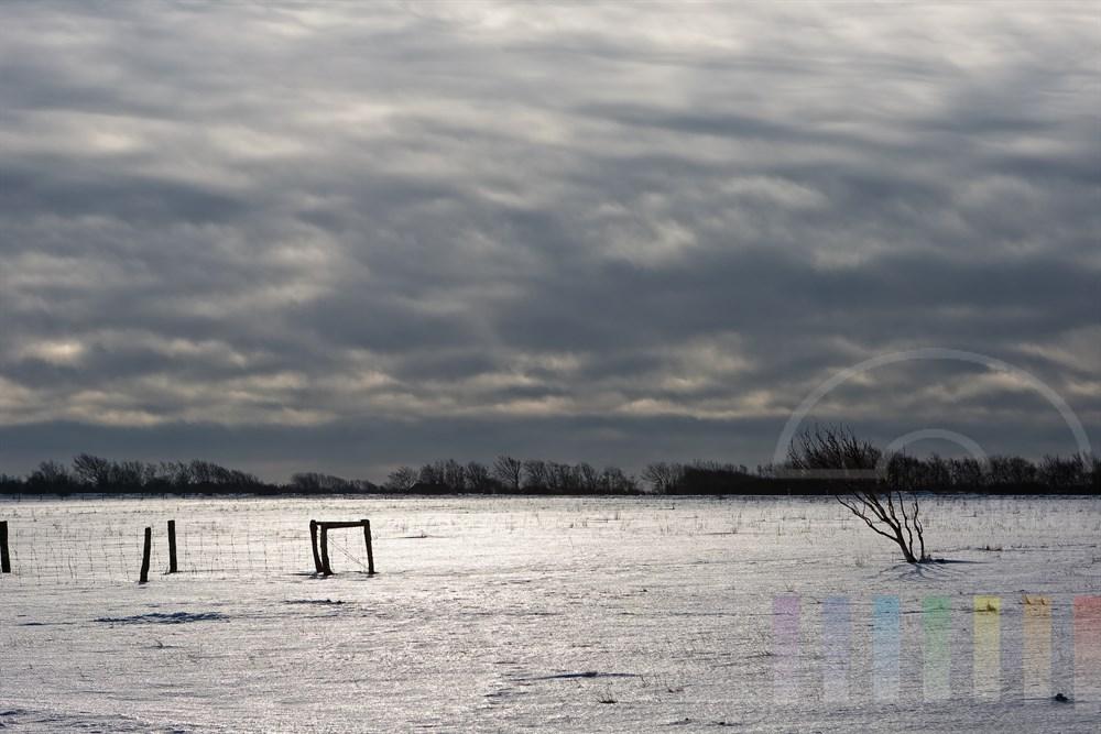 Winter-Landschaft in der Braderuper Heide mit verharschter Schneedecke auf der das letzte Sonnenlicht vor einem Wetterwechsel refelktiert