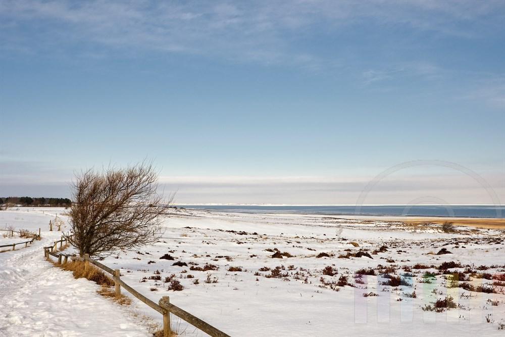 verschneite Landschaft in der Braderuper Heide