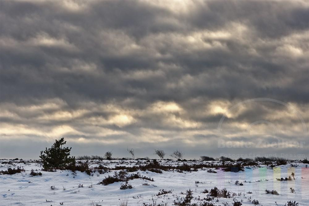 Winter in der Braderuper Heide/Sylt mit Wolkenhimmel