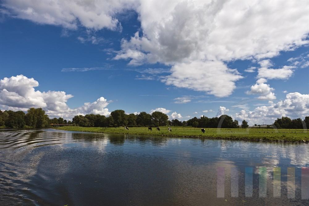 Bootsfahrt auf der Dove Elbe. Auf den Uferweiden grasen Kuehe, dazwischen rasten zahllose Wildgaense, sonnig, sommerlich