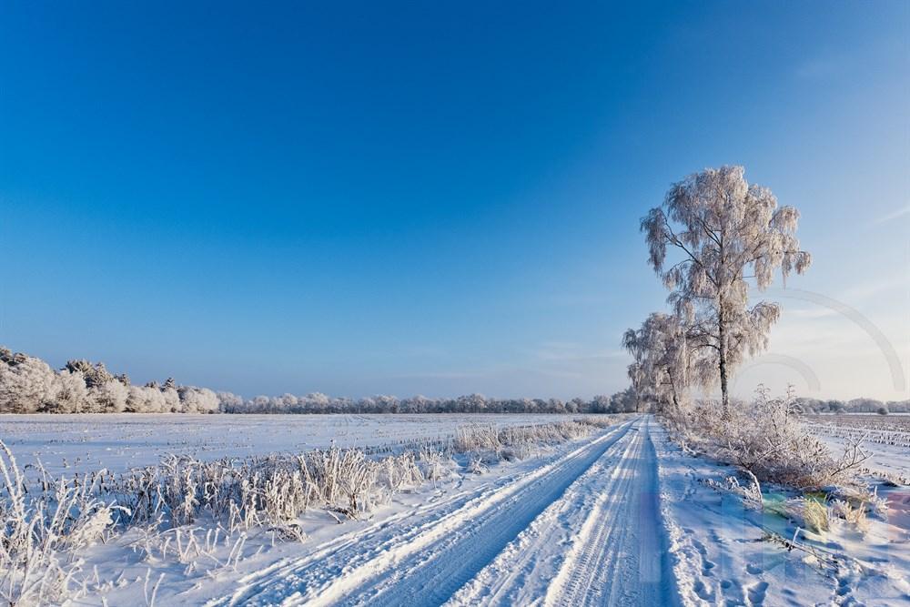 Verschneite Winterlandschaft mit Birken am Feldweg zwischen Feldern und Aeckern, sonnig, blauer Himmel
