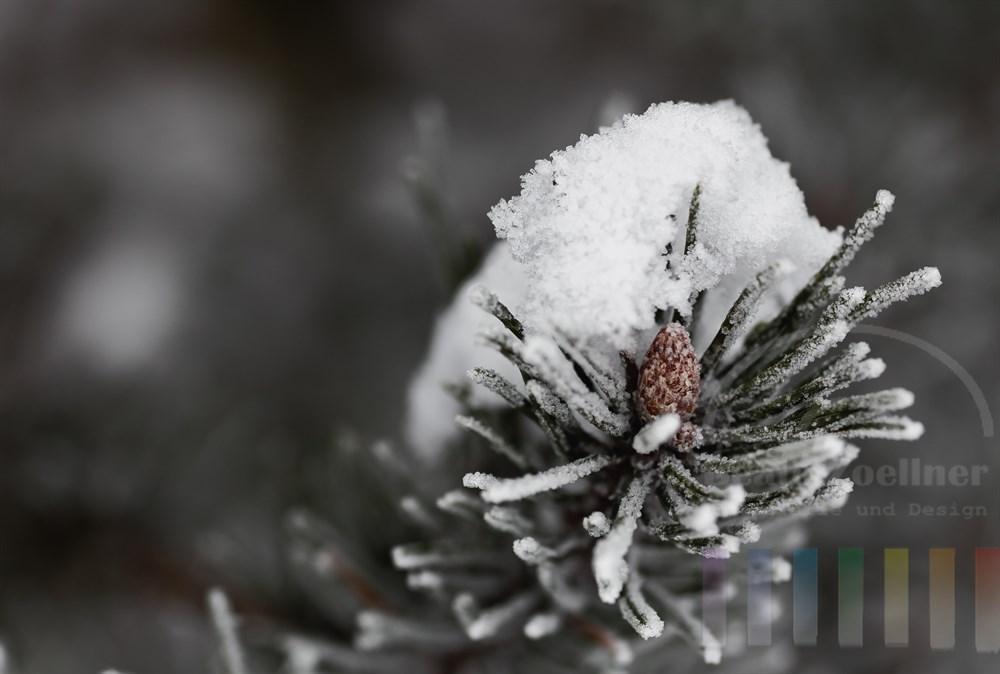 frischer Schnee liegt auf der Spitze eines Tannenzweiges