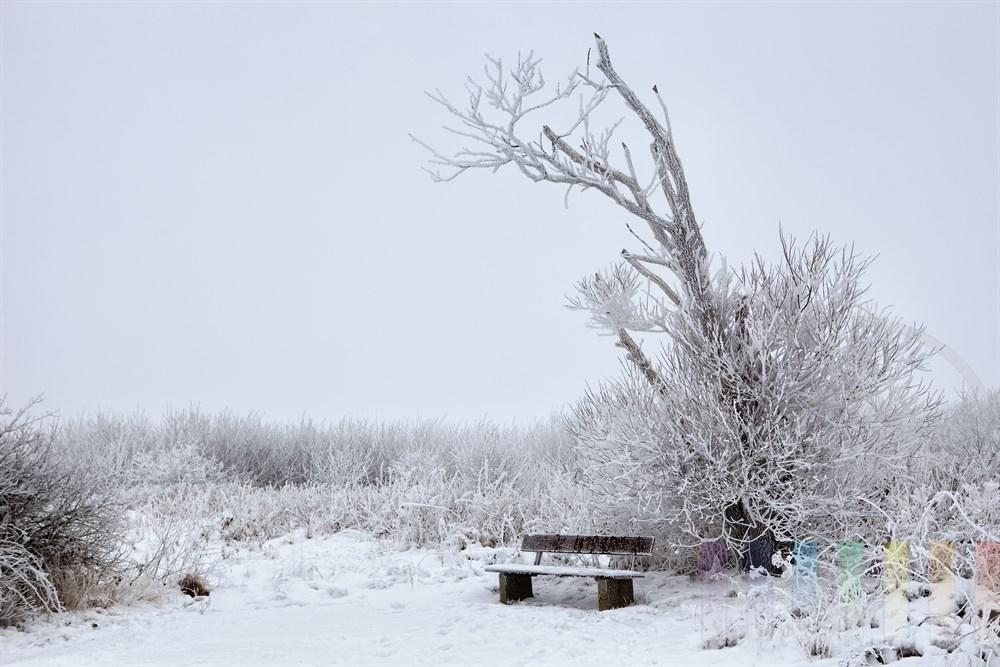verschneite Parkbank unter einem abgestorbenen Baum