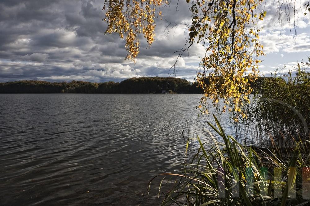 gold-gelbe Birkenblätter leuchten in der Herbstsonne am Seeufer