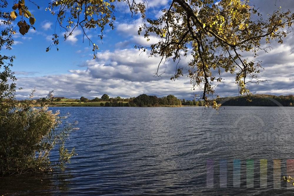 Goldgelb leuchtende Birkenblätter in der Herbstsonne über dem Segeberger See (Schleswig-Holstein)