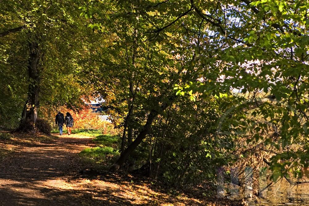 aelteres Paar spaziert Hand in Hand auf einem mit Herbstlaub bedecktem Weg am Seeufer entlang. Ueber ihnen woelbt sich ein buntes Blaetterdach, sonnig