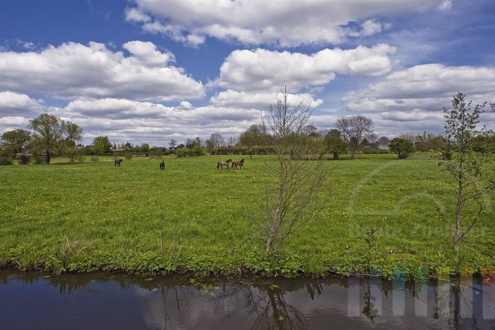 Pferde laufen auf Frühlings-Weide an der Dove-Elbe in den Hamburger Vier- und Marschlanden, sonnig